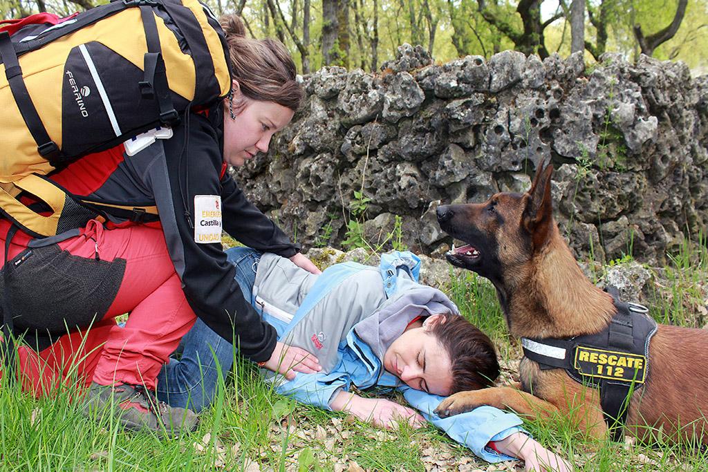 perros rescate